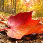 caida pelo otoño